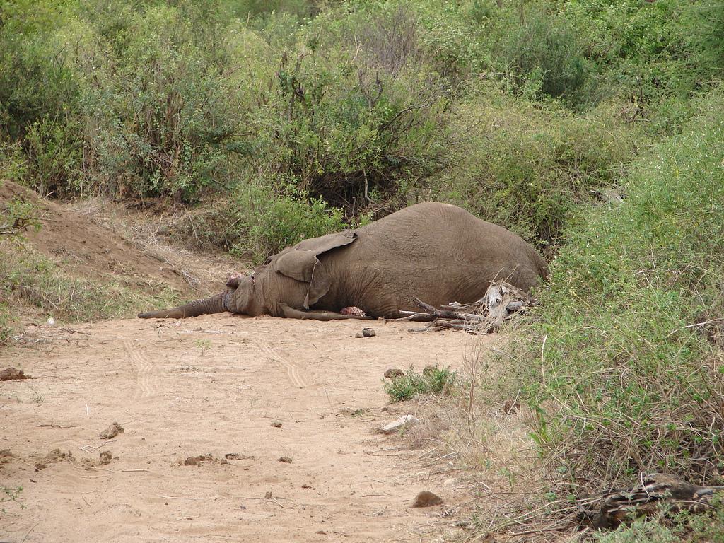 do Elephants Eat Meat i Couldn 39 t Eat an Elephant
